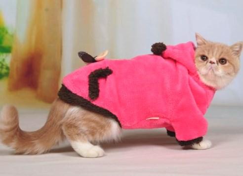 Как сшить одежду для кота своими руками