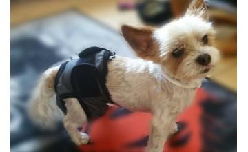 Как сделать памперс для собаки и как правильно его одеть
